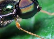 苍蝇微距摄影图片