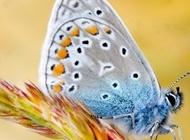 美丽孔雀图片大全 色彩美丽的蝴蝶图片大全