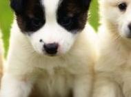 宠物豹猫图片大全 超级可爱的宠物狗图片大全