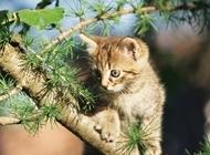 超可爱小猫图片大全 呆萌可爱的小猫图片超清