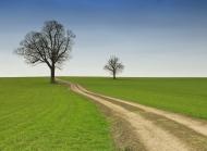 绿色田野图片 乡间小路之绿色田野图片壁纸