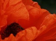 生机勃勃的春景图片 生机勃勃的春天摄影高清图片壁纸