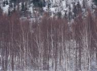 冬天的风景