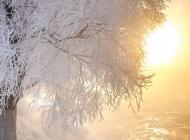 冬天垂柳雪景图片 冬天高山雪景图片欣赏