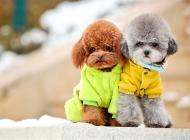 动物壁纸 高清动物可爱狗狗萌宠图片合集
