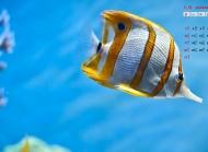 2014年8月日历桌面壁纸神秘梦幻的海底世界高清图片