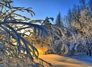 冬季皑皑白雪唯美壁纸