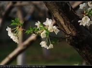 140328春暖花开