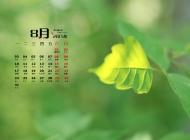 2015年8月日历精选唯美的树叶桌面壁纸图片下载