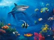 动态动物壁纸桌面 海底世界鱼动态桌面壁纸图集