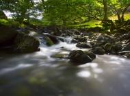 森林小镇图片大全 金黄色的唯美意境小路森林摄影图片
