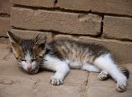温和的小猫