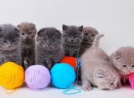 小猫图片大全 木栅栏上的小猫图片