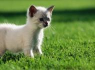 白色猫图片大全 纯白色猫咪