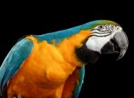 鹦鹉图片大全 可爱的虎皮鹦鹉