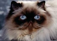 猫猫图片大全 萌猫猫图片