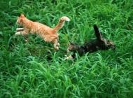 草地玩耍的猫咪图片