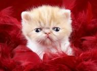 宠物小老虎图片大全可爱 可爱的宠物小狗狗图片