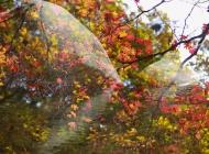 红叶摄影图片