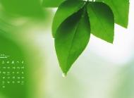 2015年9月日历精选水珠滴落绿叶护眼电脑桌面壁纸下载