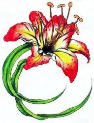 花卉纹身图片:彩色百合纹身图片图案