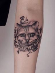 手臂流行经典的黑白猫咪纹身图片