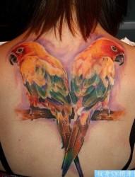 女人后背前卫经典的鹦鹉纹身图片