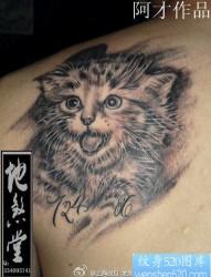男性后肩背可爱的猫咪纹身图片