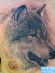 男生前胸时尚经典的狼头纹身作品