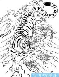 纹身520图库热推:几张传统下山虎纹身图片作品