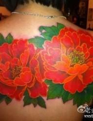 美女背部彩色牡丹纹身图片