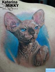 后背一幅写实的猫咪纹身图片