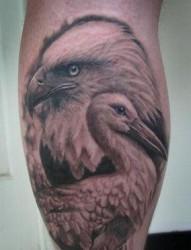 老鹰纹身图片:腿部老鹰天鹅纹身图片纹身作品