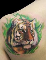 肩部3D彩色老虎虎头纹身