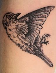 手臂上死亡死亡小鸟纹身