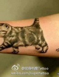 女人手臂小巧可爱的猫咪纹身图片