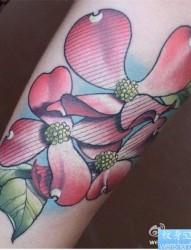 一幅手臂彩色蝴蝶兰纹身图案