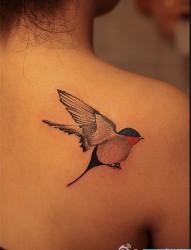 肩背鸟类纹身图案