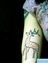 女人手臂彩色小鹿纹身图案