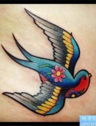彩色燕子纹身图案