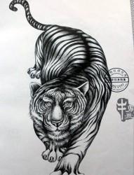 一款素描老虎纹身图案
