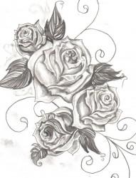 漂亮好看的玫瑰手稿
