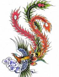 女士彩色飞舞的凤凰祥云纹身手稿图案