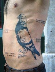 男子侧肋上带解说的鸽子纹身图案