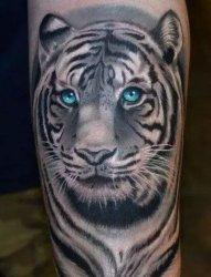3D老虎纹身,小腿老虎纹身,惠山纹身店电话,远航纹身