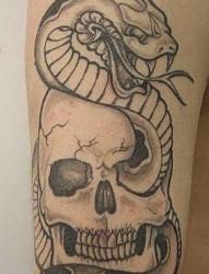 一组大气的蛇纹身手稿素材