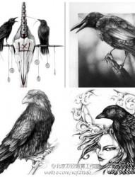 流行很酷的一组乌鸦纹身手稿
