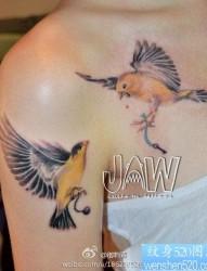 美女手臂和胸前漂亮的小鸟纹身图片