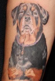 手臂丰富多彩的罗威纳犬纹身图案