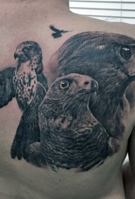背部写实华丽的逼真各种鹰纹身图案